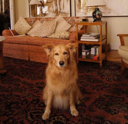 Elsa, the French dog