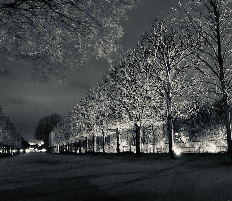 eerie-trees