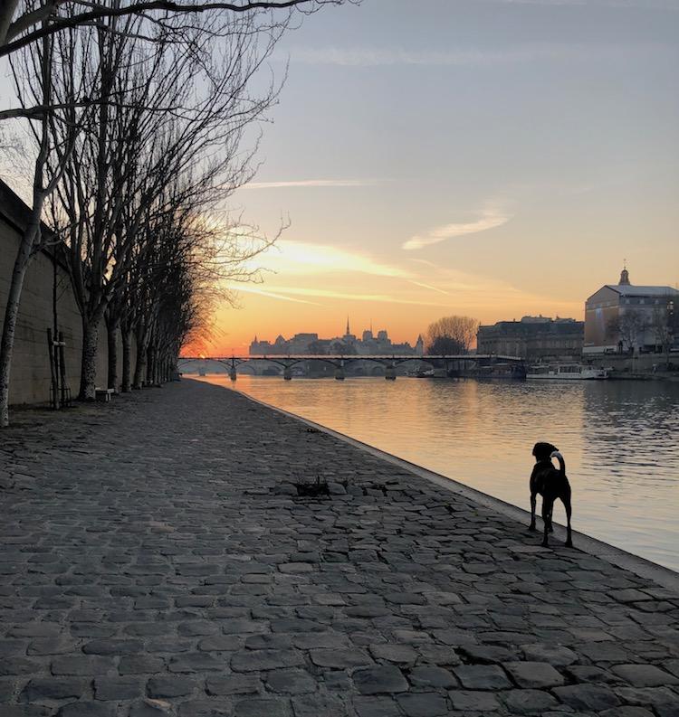 T-Seine-dawn
