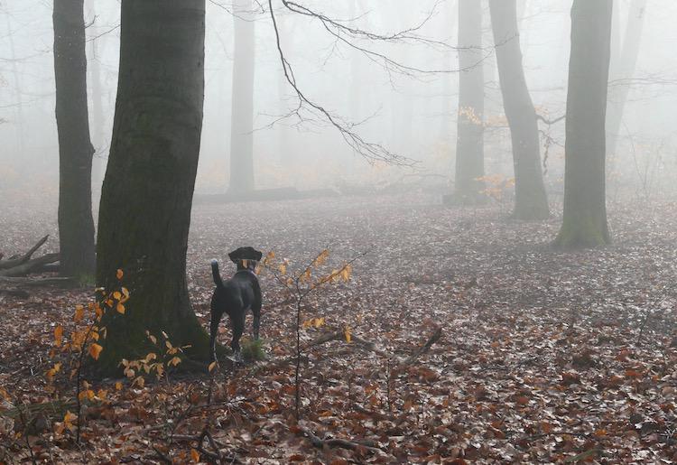 T-fog-woods
