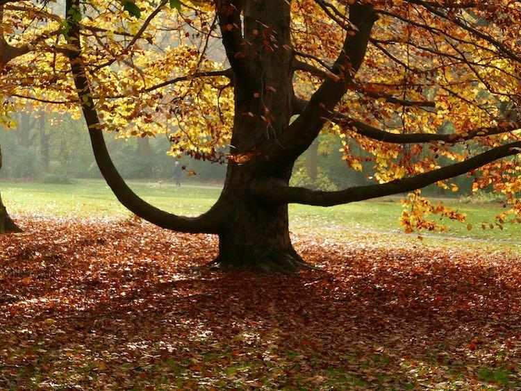 Tiergarten-tree
