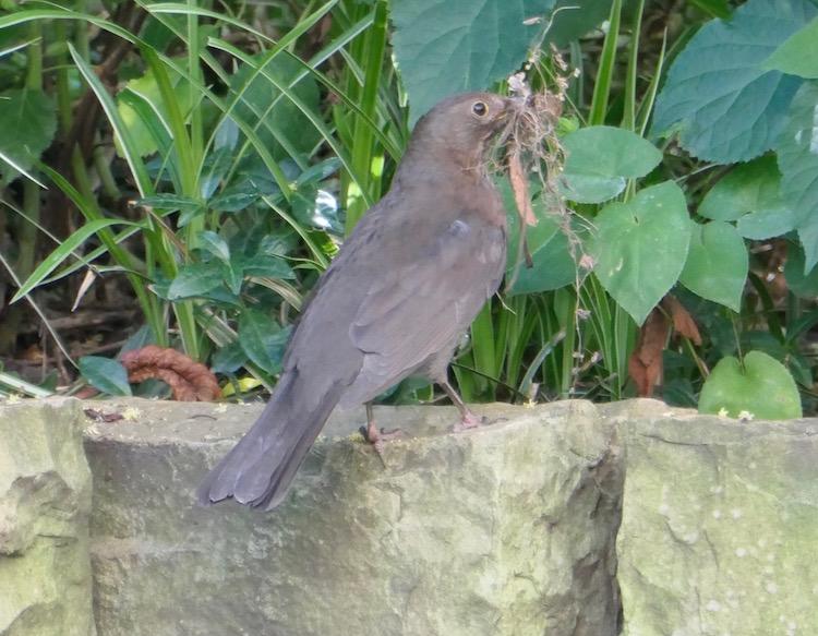 nesting-bird